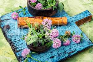 Clover in herbal medicine