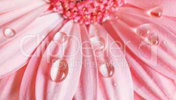 Petals, water drops