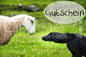 Dog Meets Sheep, German Word Gutschein Means Voucher