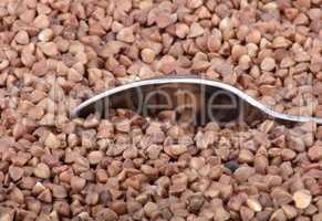 buckwheat background and one teaspoon
