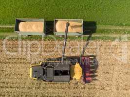Maisernter lädt gehäckselten Mais auf Traktor-Anhänger