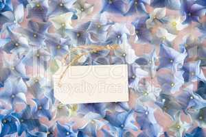 Shiny Hydrangea Flat Lay, Copy Space, Blossom Texture