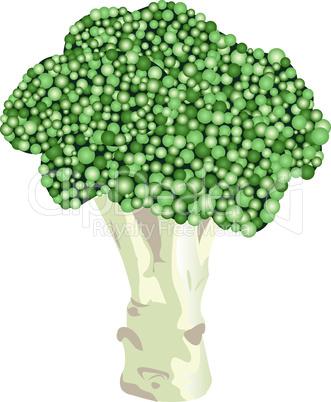broccoli fresh vegetable icon vector illustration design