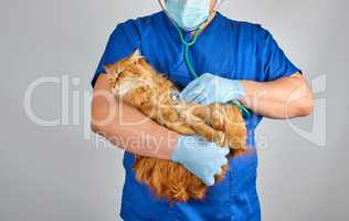Veterinarian in blue uniform and sterile latex gloves holds and