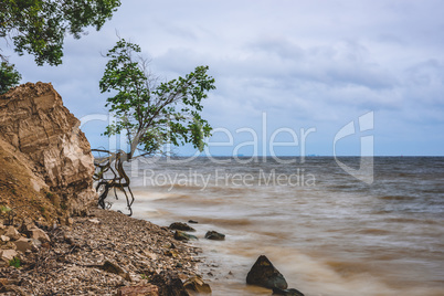 Tree on the rocky shore at stormy day