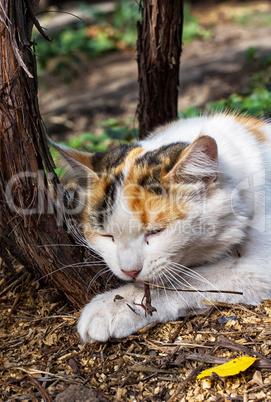 street cat lying on the ground