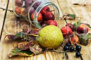 autumn pear rosehip