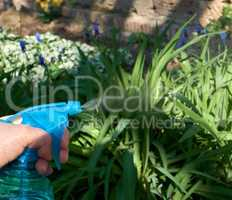 female hand holding a blue plastic bottle with liquid and sprayi