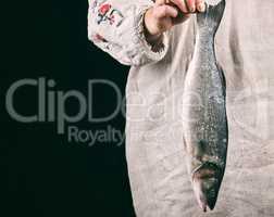 whole fresh sea bass fish in female hands