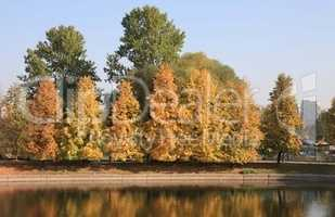 city park in gold fall