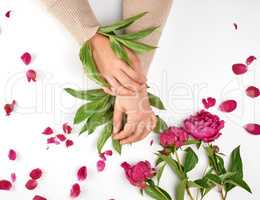 two female hands and burgundy blooming peonies