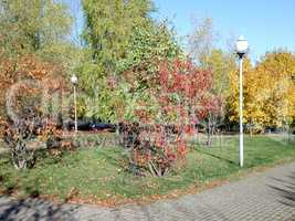 Autumn in city park at dry sunny day
