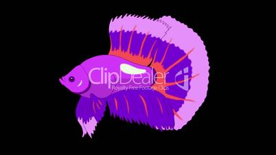 Big Purple Aquarium cockerel fish Alpha Matte looped