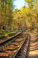 rails out of order in a forest in Poland