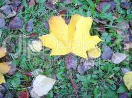 yellow leaf on earth
