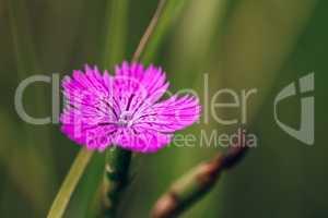 Beautiful Purple Forest Flower.