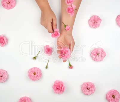 two female hands with smooth skin, white background with pink ro