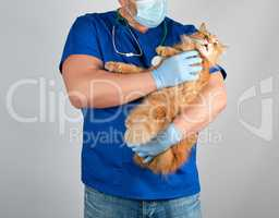 male vet in blue uniform and latex gloves holding an adult fluff