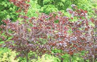 tree at spring day