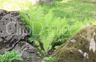 green fern at day