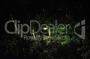 lantern in night