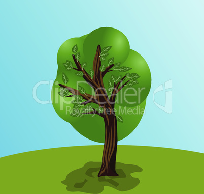 Single nature tree landscape