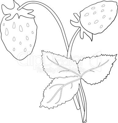 Strawberry bush outline