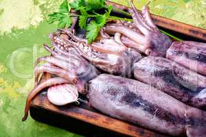 Fresh raw squid