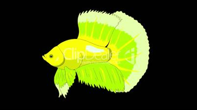 Big Green Aquarium cockerel fish Alpha Matte looped