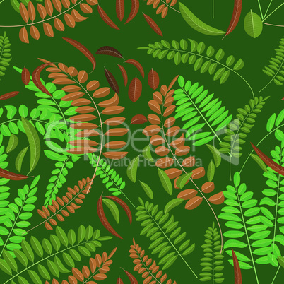 Seamless pattern with green and ginger acacia leaf on darc green background. Vector illustration acacia leaves