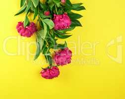 bouquet of red peonies with green leaves on a yellow background