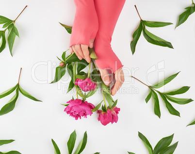 female hands and burgundy blooming peonies