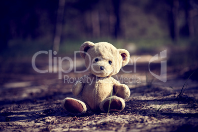 teddy bear sitting in the middle of the forest