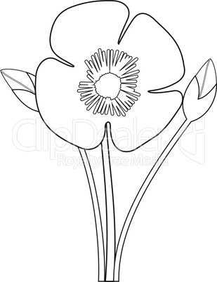 Poppy flower outlines