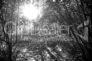 forest in back light, light and shadow
