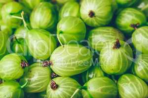 Background of Ripe Green Gooseberry.