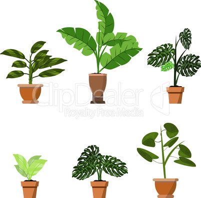 Potted plants isolated on white. Vector set of six green tropical plants in pot illustration