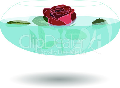 Scarlet rose in a vase of water. Vector illustration beatiful rose in nice transparent bowl with water