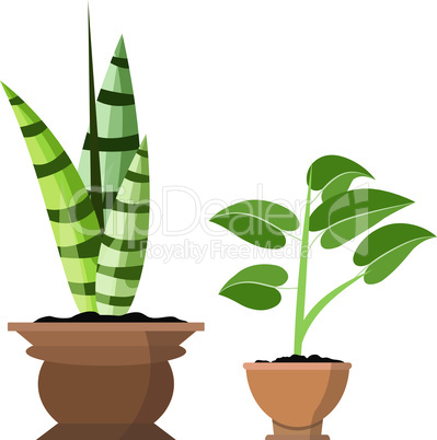 Potted plants isolated on white. Vector set of two green tropical plant in pot illustration