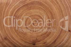 Ash wood slab texture with annual rings.