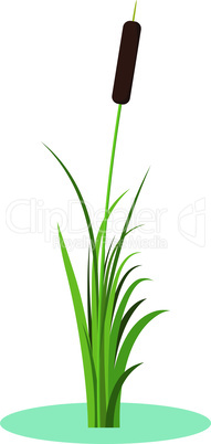 Reed stem plant vector isolated on white background