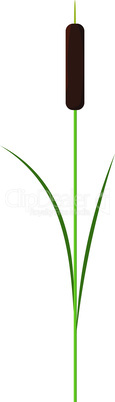 Single reed stem plant vector isolated on white background