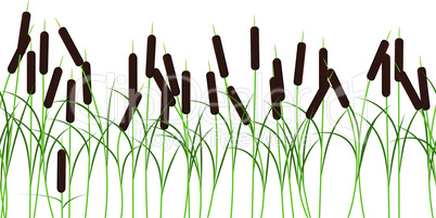 Vector reed stems plant seamless pattern on white background
