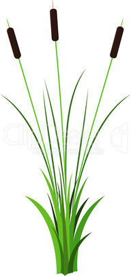 Cluster of three thin reed stalks with leaves plant with grass vector isolated on white background