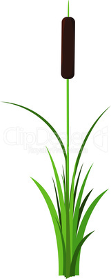Single reed stem with leaves plant vector isolated on white background