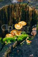 Mushrooms and moss on the tree trunk,