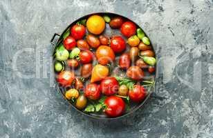 Harvest fresh tomato
