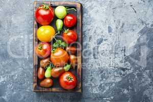 Summer harvest tomato