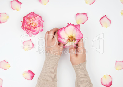 two hands of a young girl with smooth skin and pink rose petals