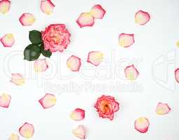 scattered chaotically pink petals on a white background